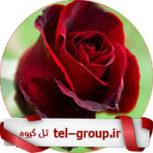 گروه بچه های عاشق تلگرام