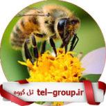 گروه آموزش زنبورداری تلگرام