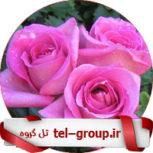 گروههای گپ دوستانه