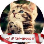 گروه در تلگرام
