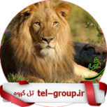 لینک گپ اصفهان